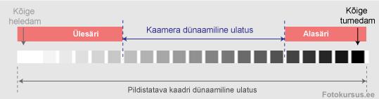 dyn-ul-1