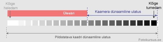 dyn-ul2
