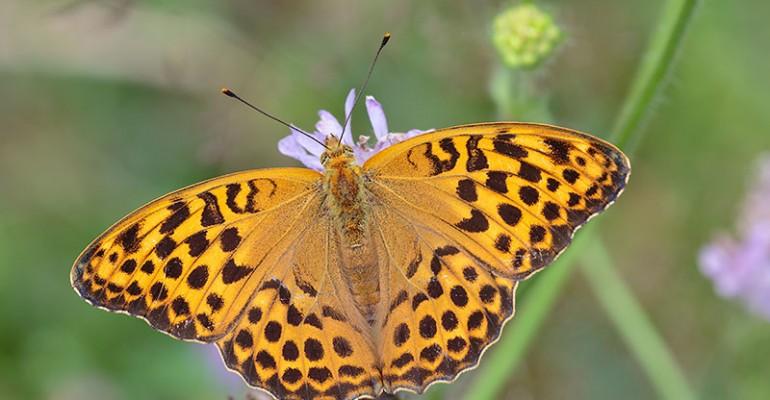 Milliste objektiividega saab pildistada liblikaid?