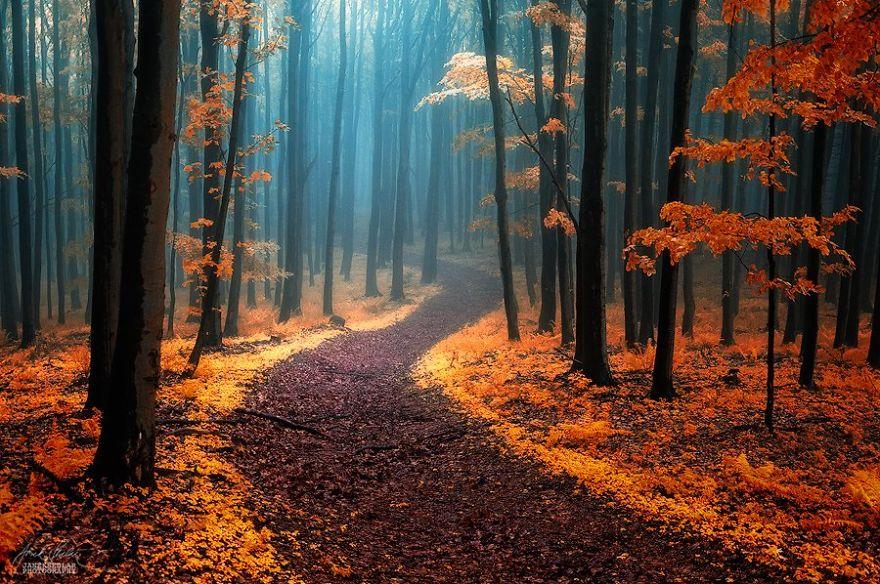 dreamlike-autumn-forests-janek-sedlar-12__880
