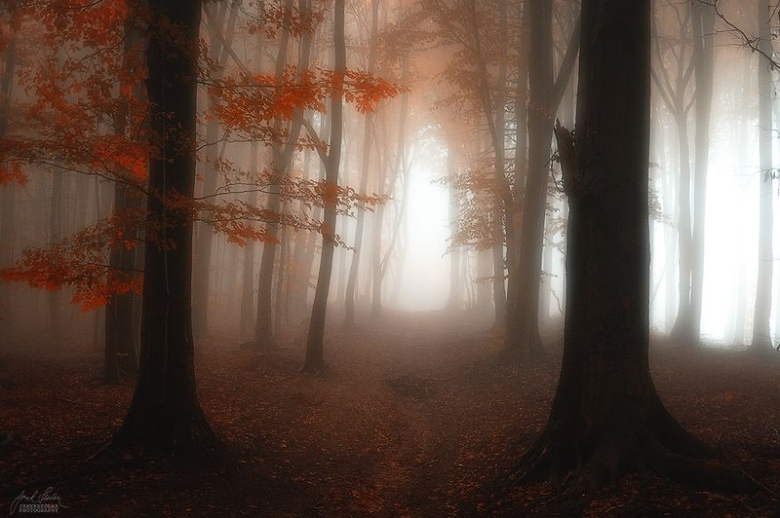 dreamlike-autumn-forests-janek-sedlar-15__880