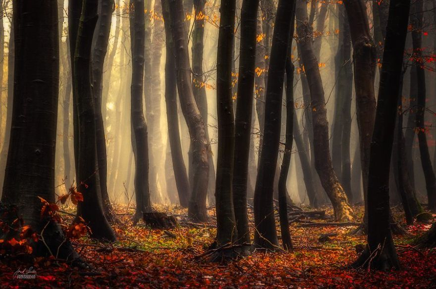dreamlike-autumn-forests-janek-sedlar-41__880