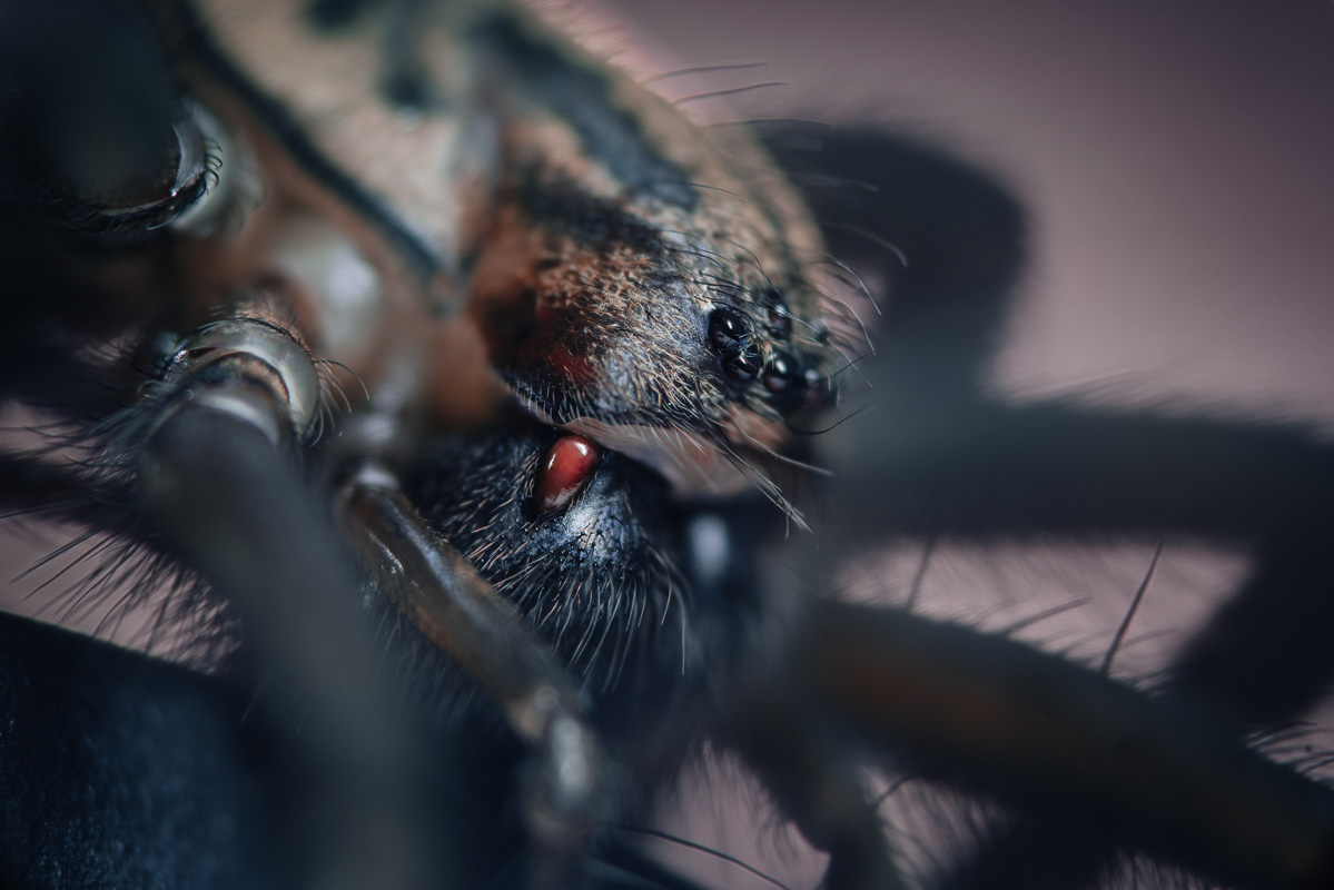 House Spider (2)