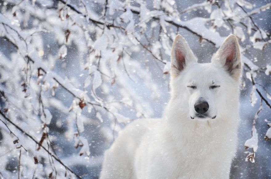 Woman-Creates-Enchanting-Portraits-of-Dogs-in-the-Austrian-Wilderness11__880