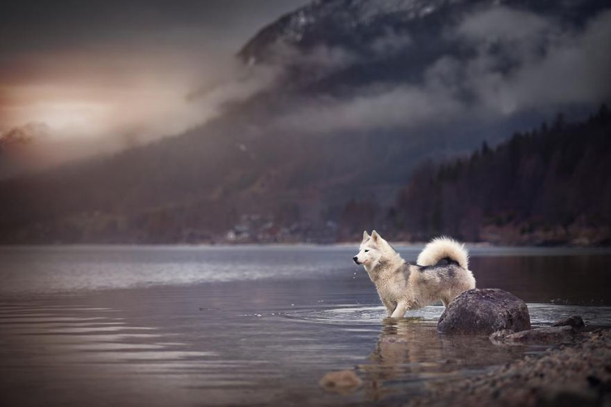 Woman-Creates-Enchanting-Portraits-of-Dogs-in-the-Austrian-Wilderness13__880