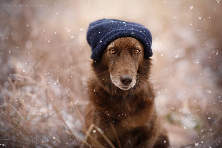 Woman-Creates-Enchanting-Portraits-of-Dogs-in-the-Austrian-Wilderness17__880