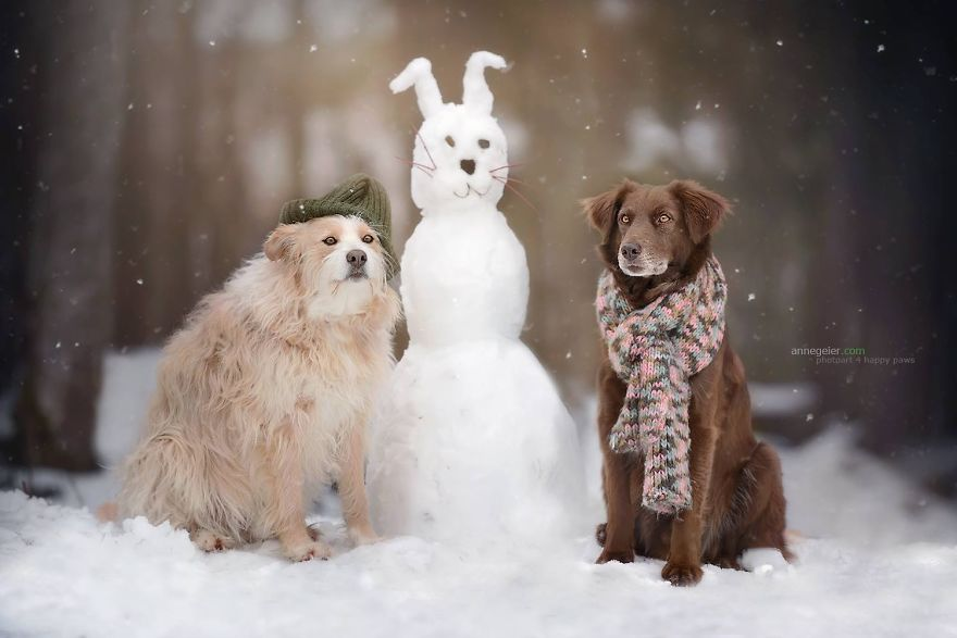 Woman-Creates-Enchanting-Portraits-of-Dogs-in-the-Austrian-Wilderness18__880