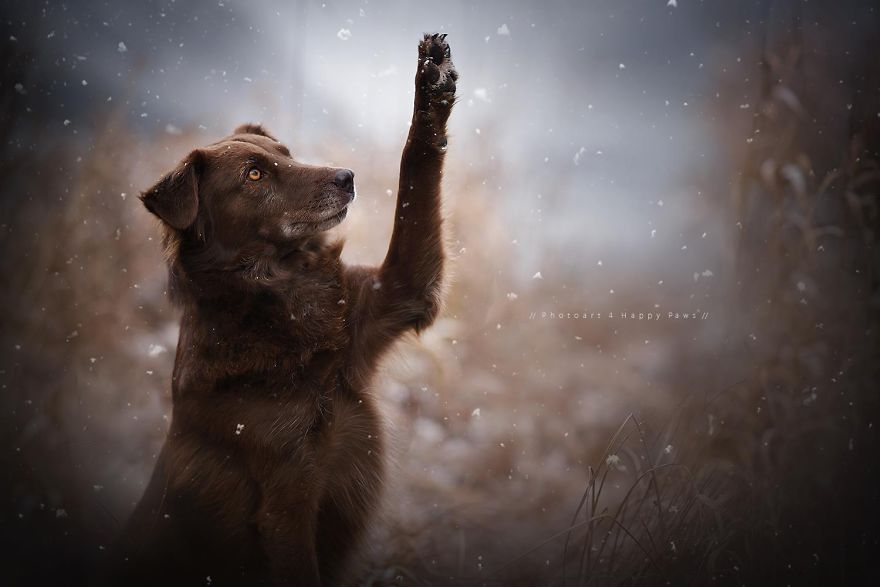 Woman-Creates-Enchanting-Portraits-of-Dogs-in-the-Austrian-Wilderness19__880