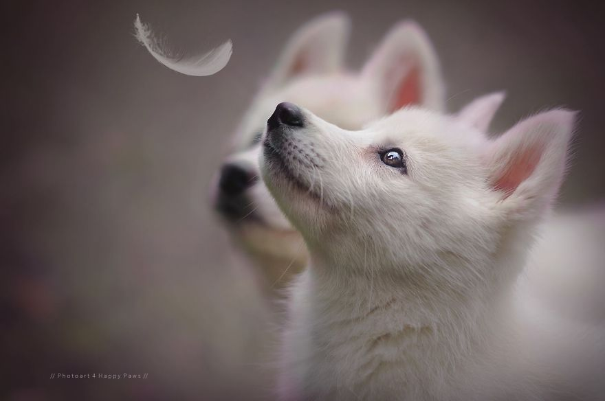 Woman-Creates-Enchanting-Portraits-of-Dogs-in-the-Austrian-Wilderness20__880