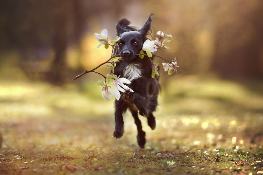 Woman-Creates-Enchanting-Portraits-of-Dogs-in-the-Austrian-Wilderness22__880