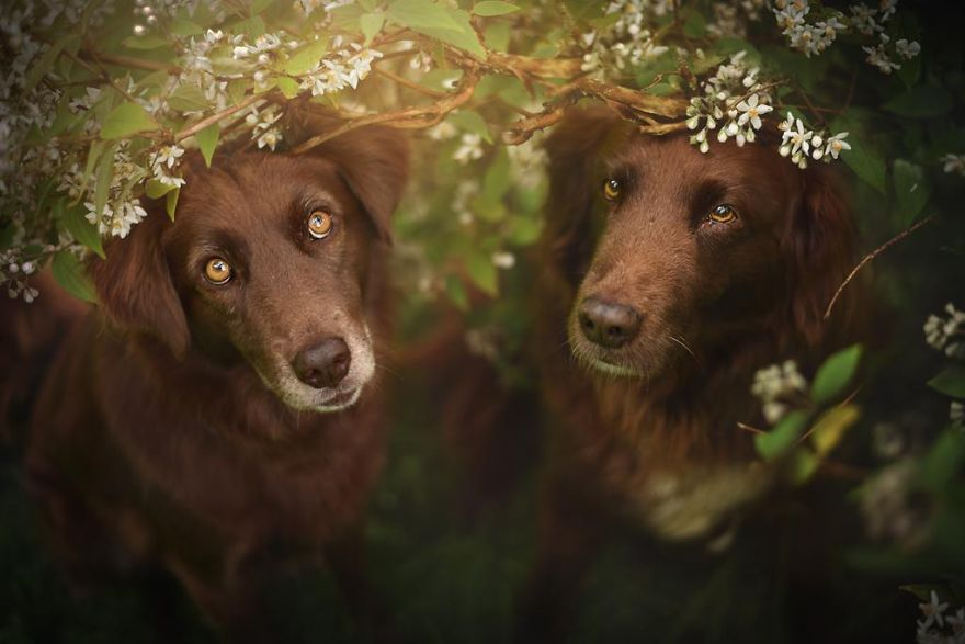 Woman-Creates-Enchanting-Portraits-of-Dogs-in-the-Austrian-Wilderness8__880