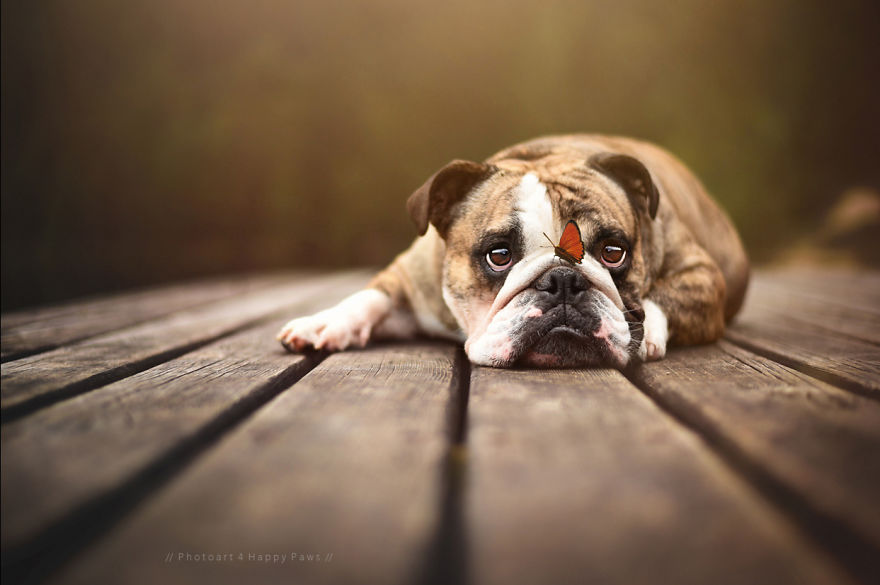 Woman-Creates-Enchanting-Portraits-of-Dogs-in-the-Austrian-Wilderness__880