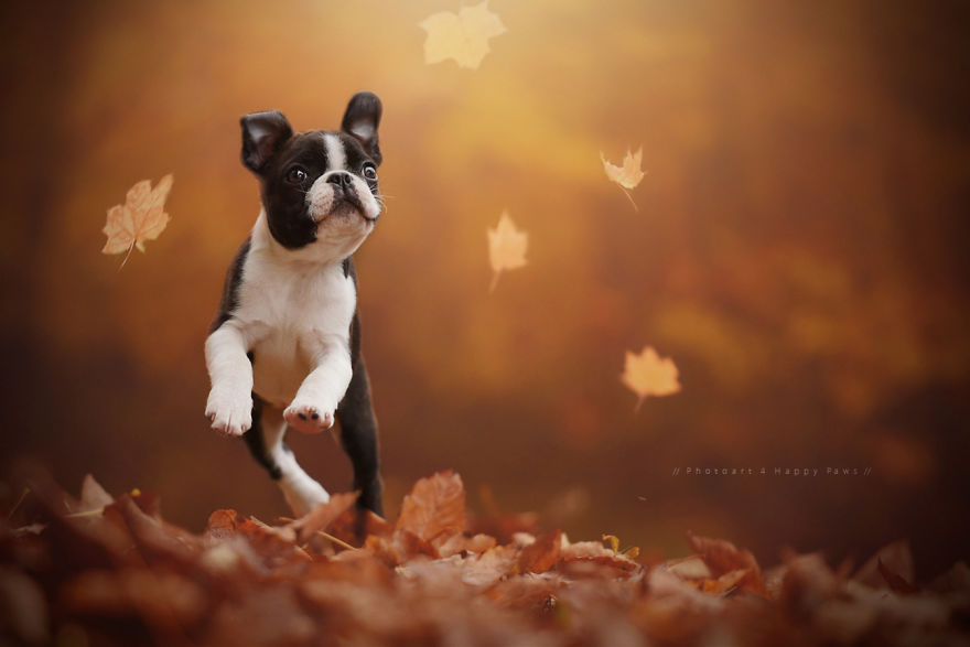 woman-creates-enchanting-portraits-of-dogs-in-the-austrian-wilderness-13__880