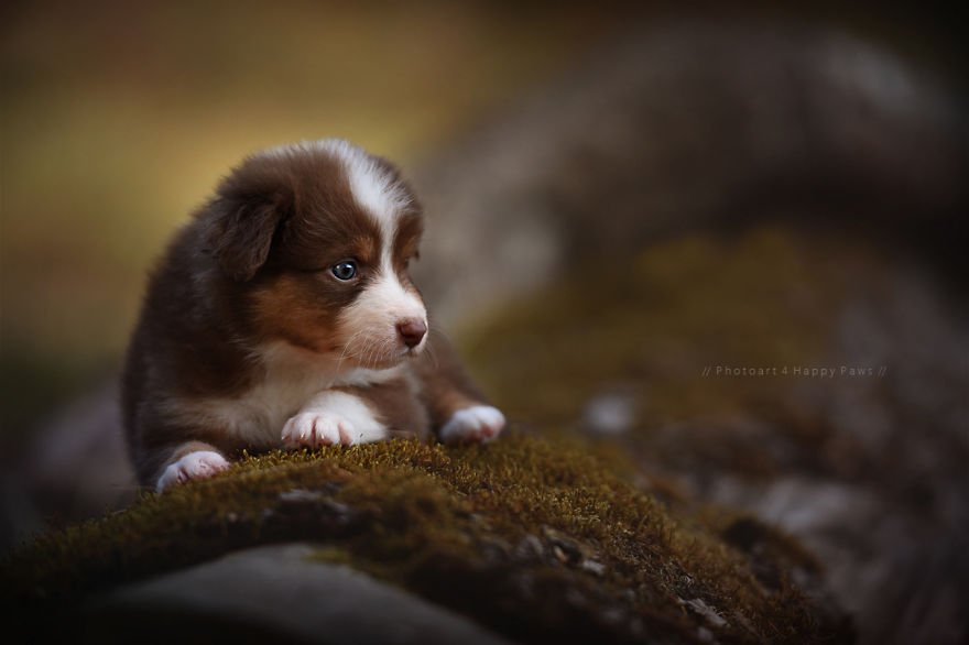 woman-creates-enchanting-portraits-of-dogs-in-the-austrian-wilderness-14__880