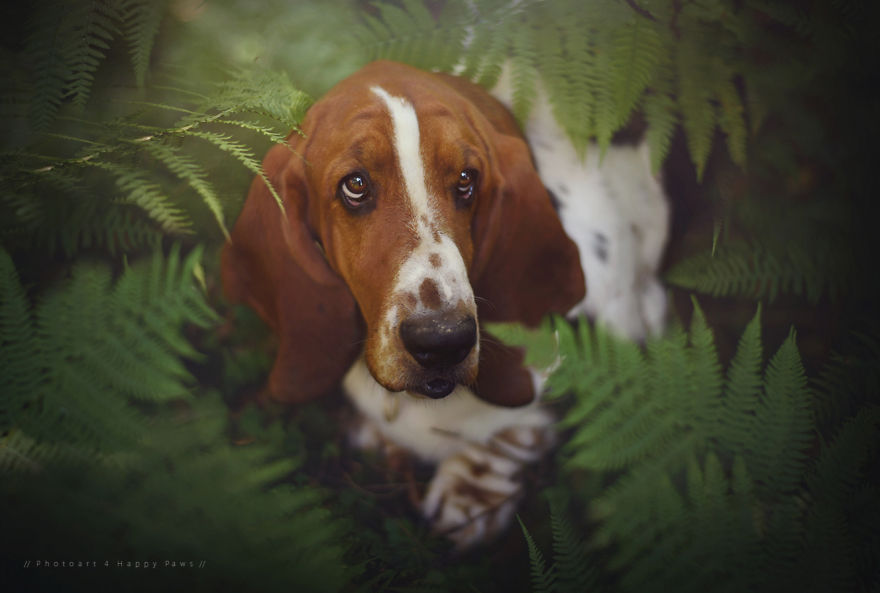 woman-creates-enchanting-portraits-of-dogs-in-the-austrian-wilderness-15__880
