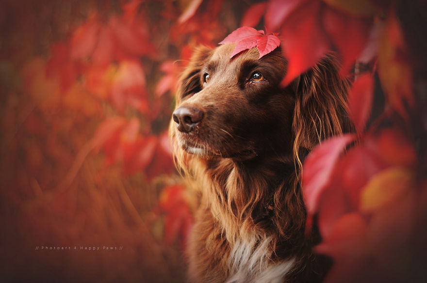 woman-creates-enchanting-portraits-of-dogs-in-the-austrian-wilderness-2__880