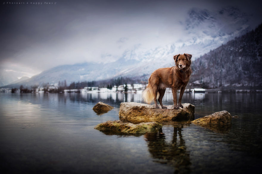 woman-creates-enchanting-portraits-of-dogs-in-the-austrian-wilderness__880 (1)
