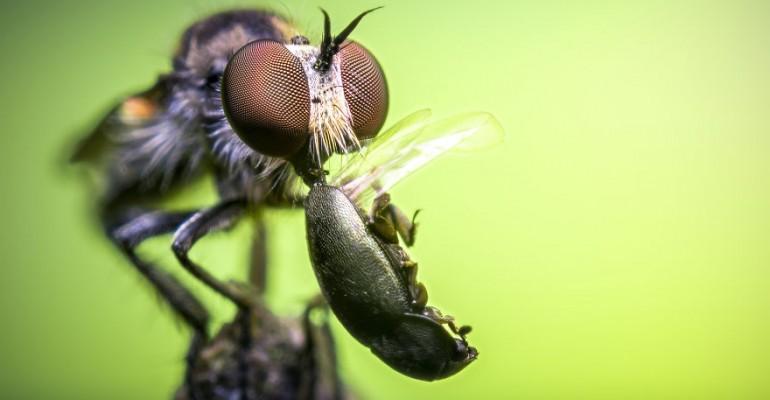 Vaata neid võrratuid makrofotosid putukatest ja ämblikutest, kui julged!